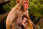 元吉说风水:2018戊戌年生肖运程之肖猴