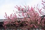风水桃花位利用好了不只是催姻缘,还容易招来小三