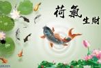 当代风水谬论三:养鱼数量会影响您的财运吗?